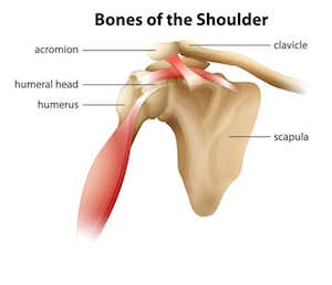 Accident Shoulder Trauma