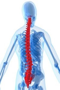 Spine Cord Injury